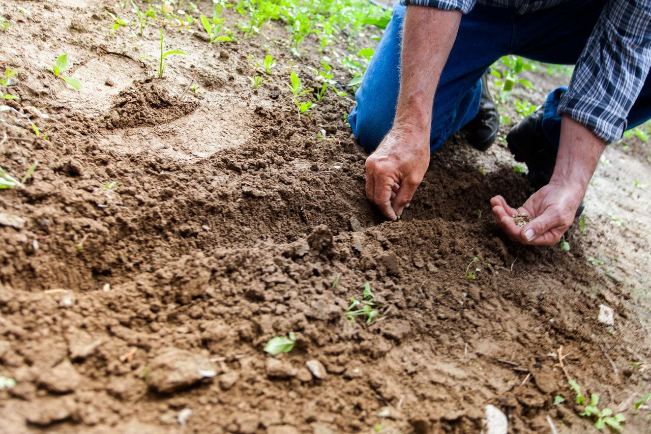 man-planting-plant-